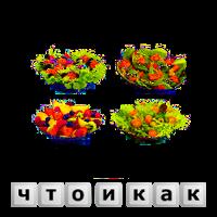 Быстрые, вкусные и недорогие салаты